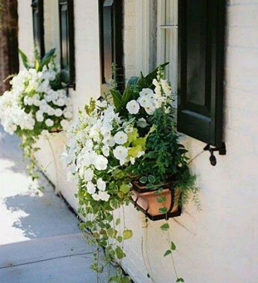 decorar ventana con petunias blancas