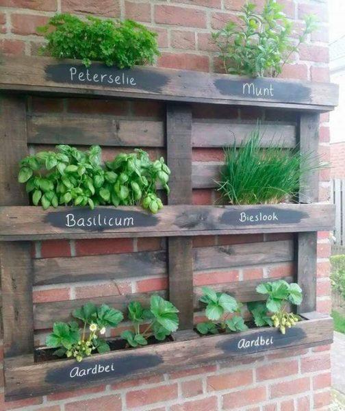 palet con plantas aromaticas