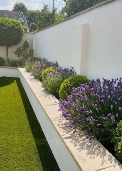 jardin trasero con plantas de bajo mantenimiento