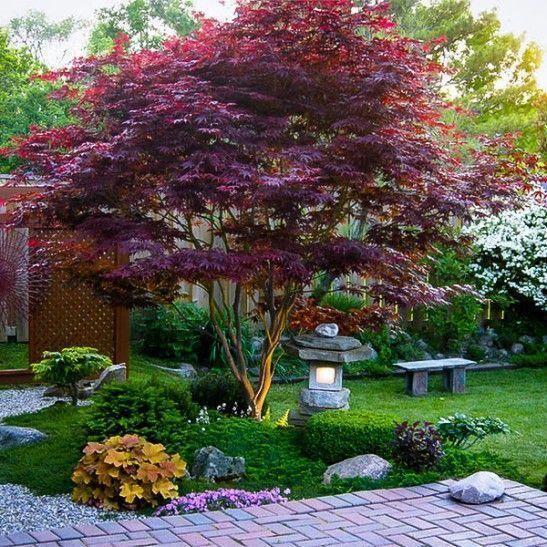 parquizacion de patios de bajo mantenimiento