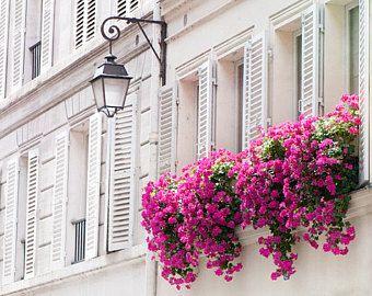 Buganvillas planta colgante con flor de exterior para sol