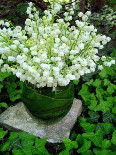Flor del valle Plantas colgantes resistentes al frío de exterior