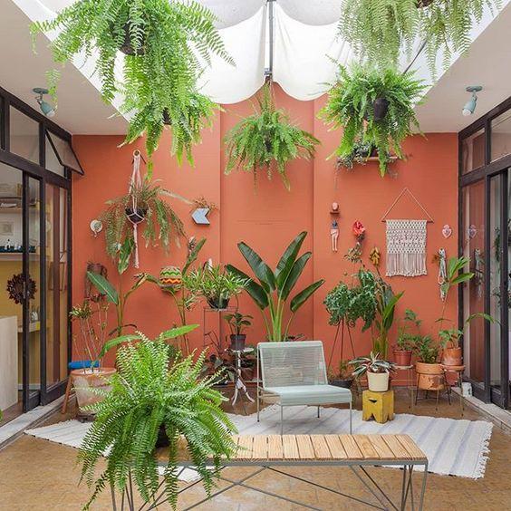 Patio o Jardin con muro pintado de coral