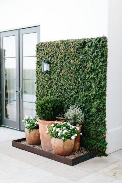 decorar paredes con enredaderas trepadoras