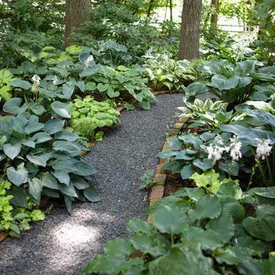 jardin de sombra con distintos tipos de Hosta