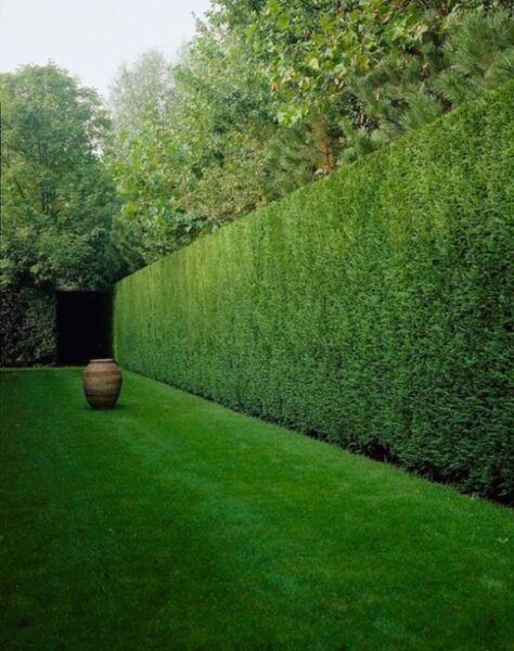 podar arbustos perennes